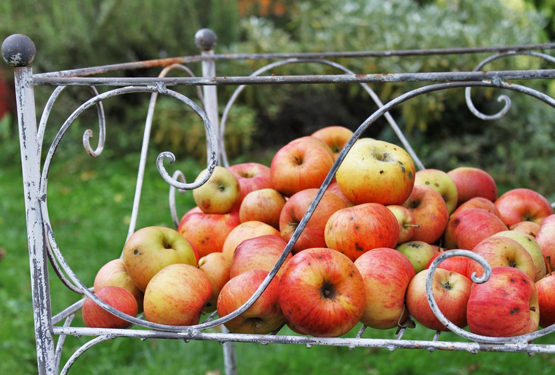 Der Apfelbaum als Kraftbaum